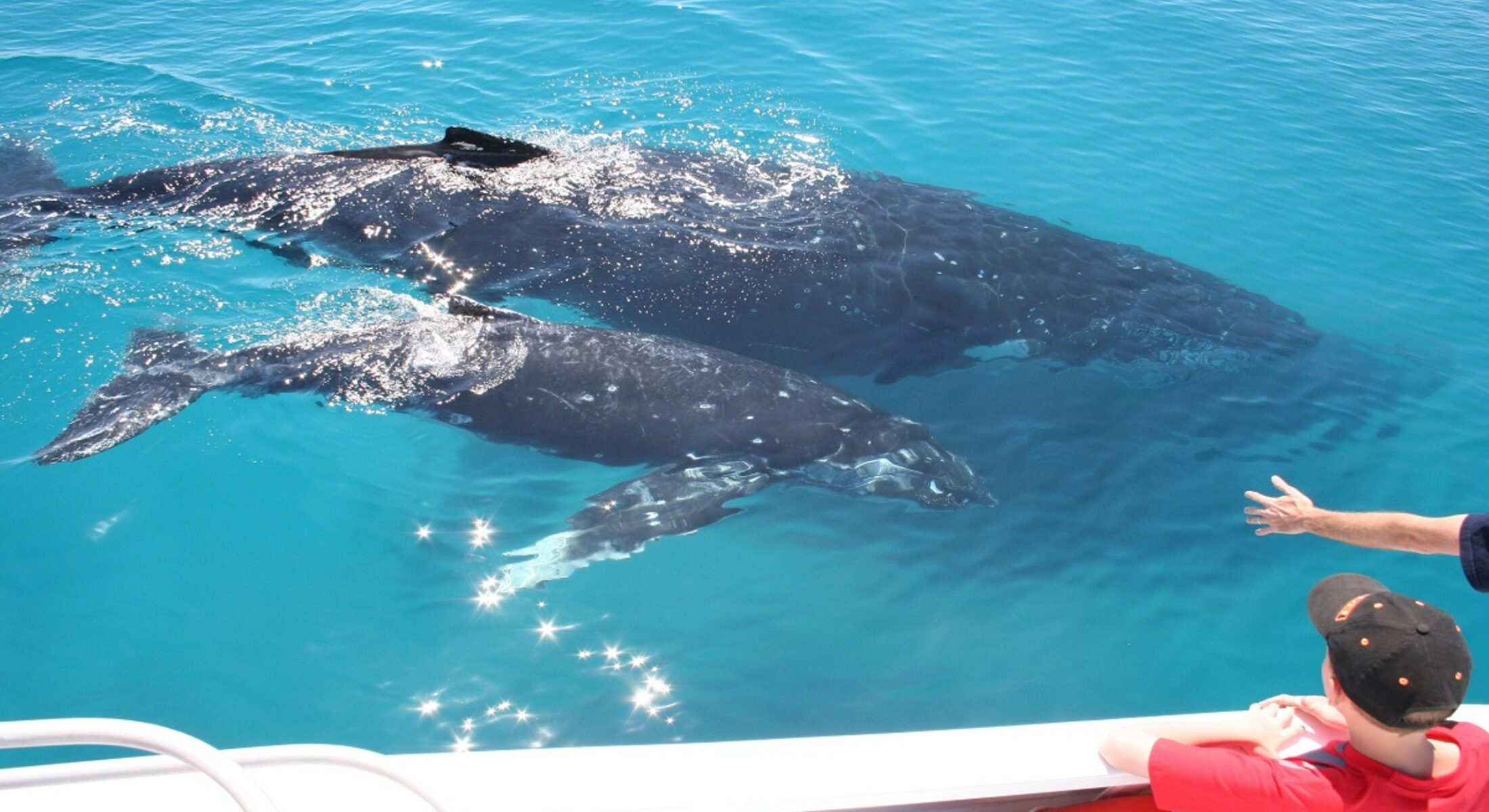 Brisbane Whale Watching Whales Encounters Moreton Bay Region