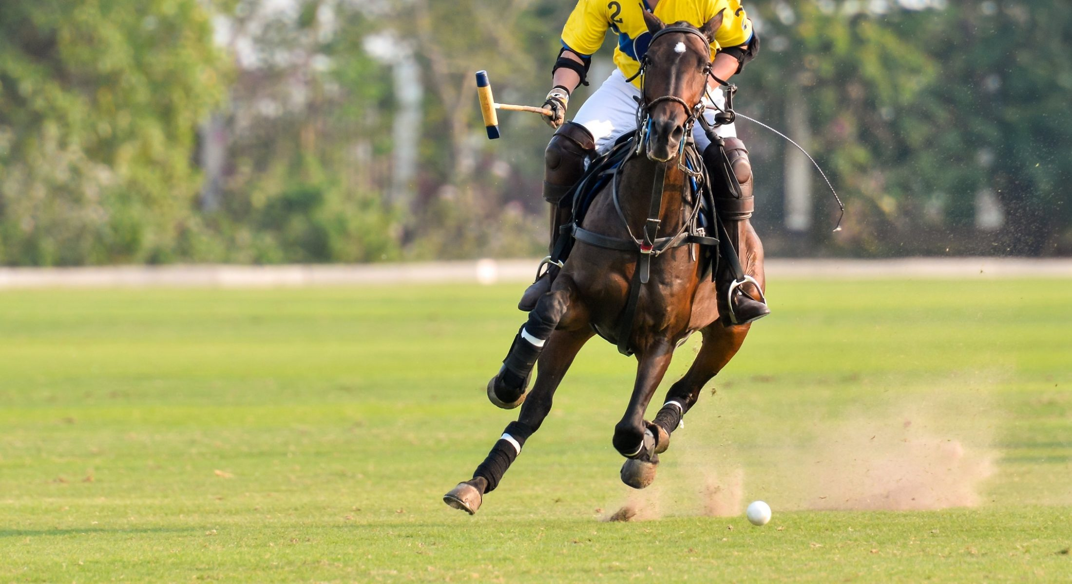 Polo by the Bay at Sandstone Point Hotel in 2020 is an inaugural event