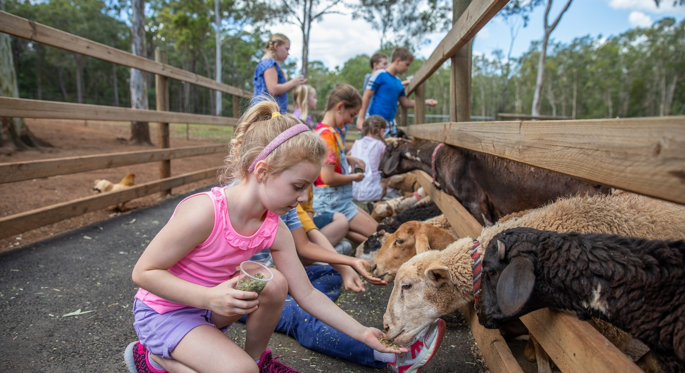 White Ridge Farm Girl Feeding Animals Moreton Bay Region
